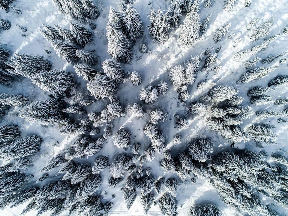 Ski de rando piste en forêt